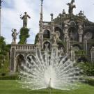 Il giardino di isola Bella. Foto di Walter Zerla